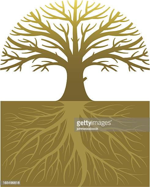 oak tree and roots - deciduous tree stock illustrations, clip art, cartoons, & icons