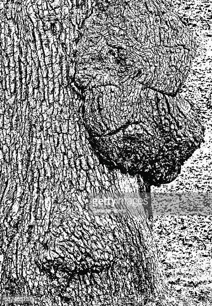 oak tree bark texture background - tree bark stock illustrations, clip art, cartoons, & icons