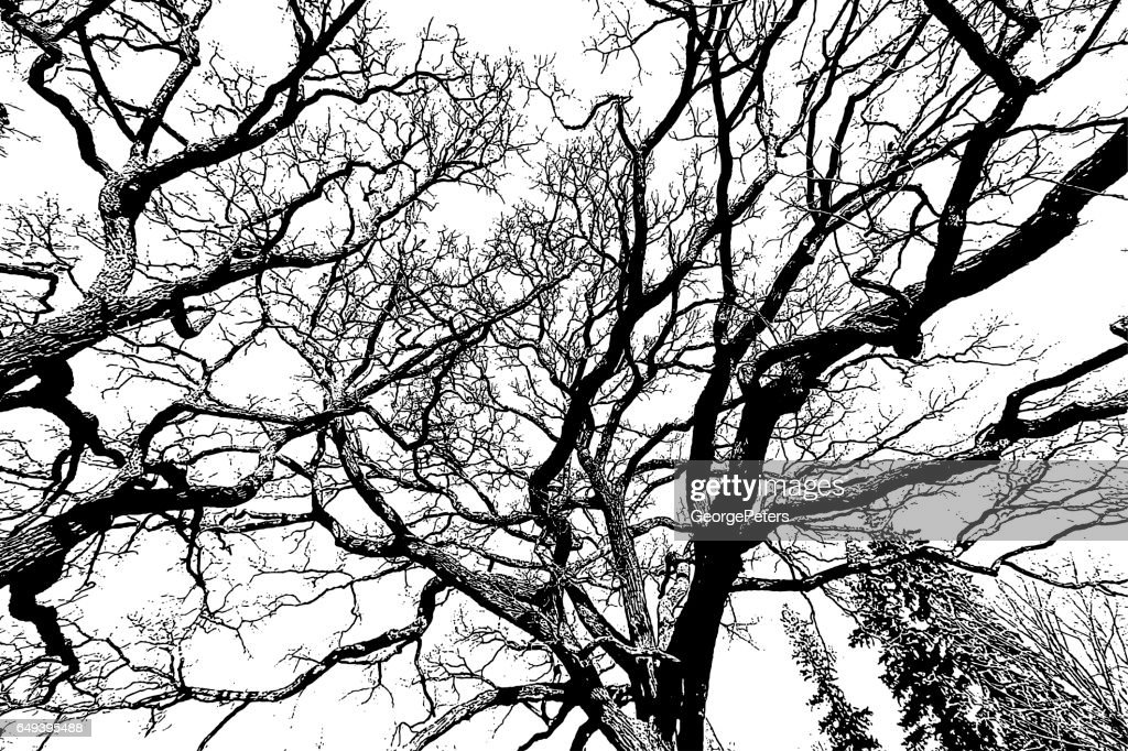 Oak Tree Branches Background