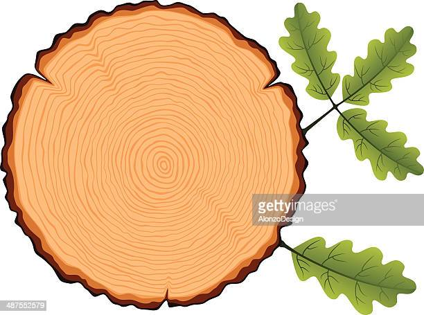 Oak Tree Cross Section with Leaves