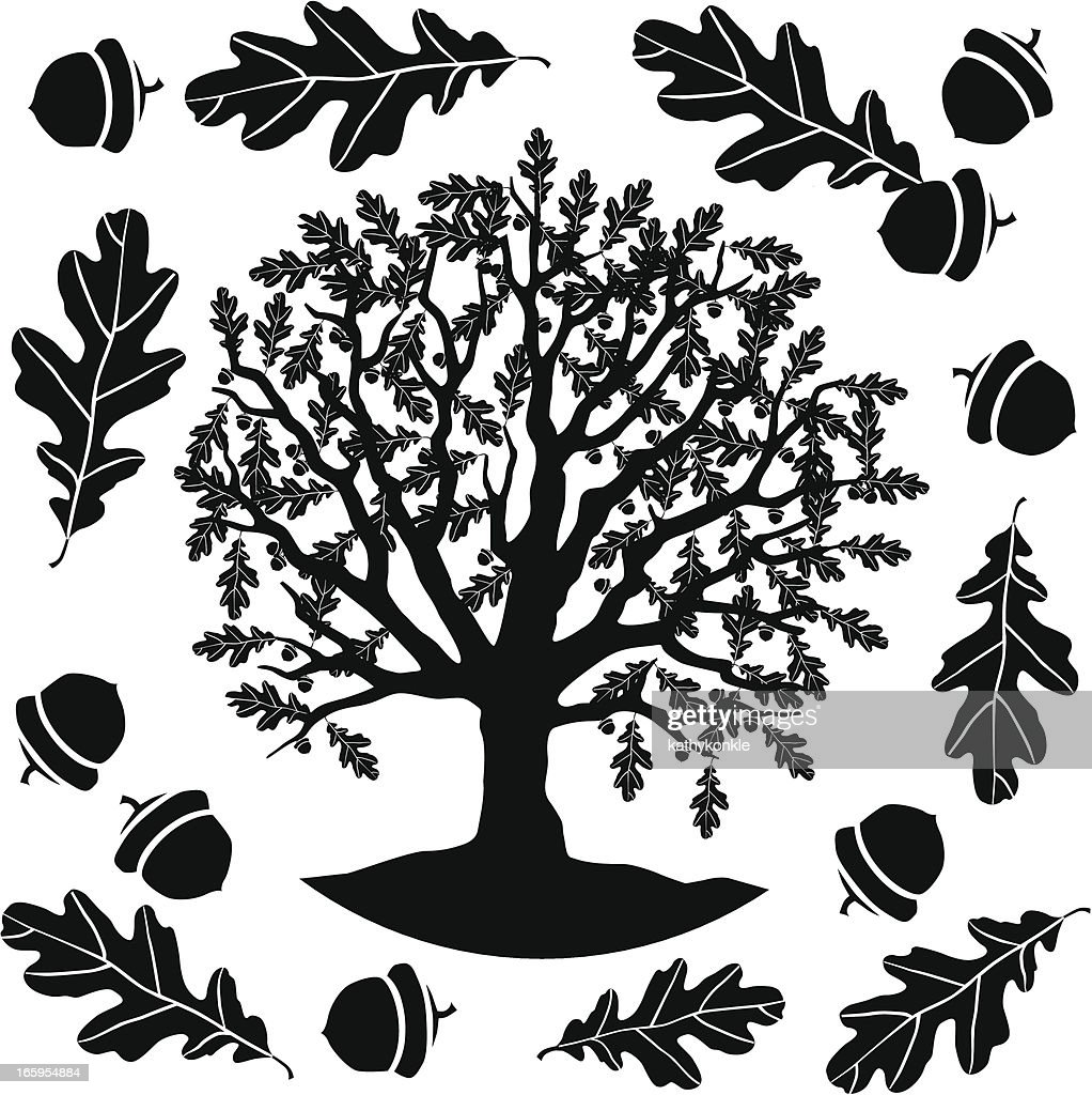 oak tree in black and white