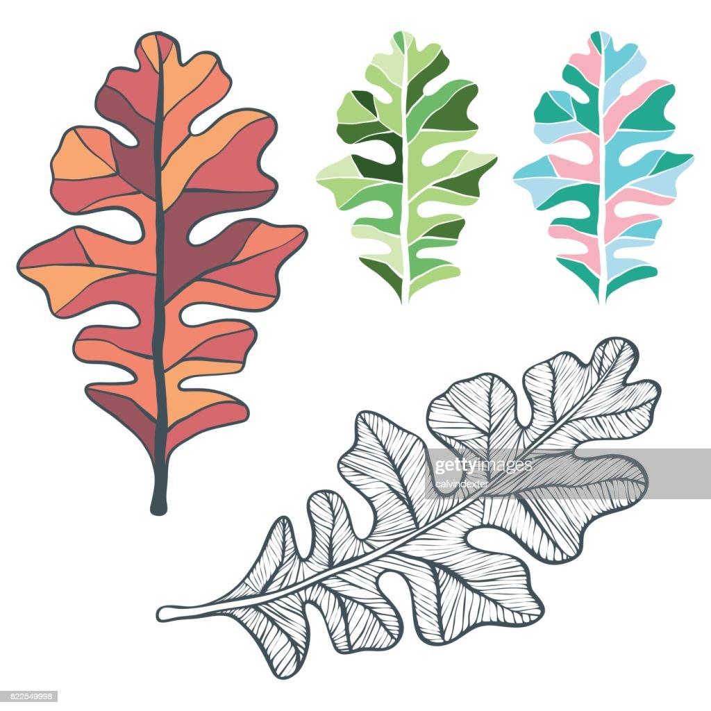 Oak tree leaves : stock illustration