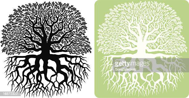 oak tree silhouette - root stock illustrations, clip art, cartoons, & icons