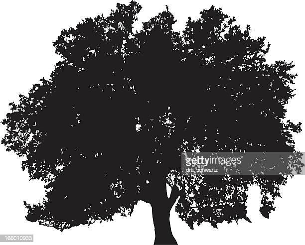 oak tree silhouette vector - deciduous tree stock illustrations, clip art, cartoons, & icons