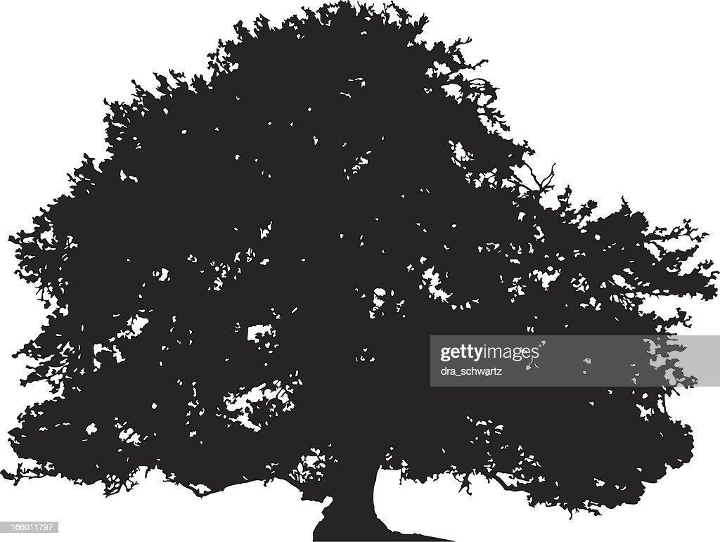 Oak tree silhouette vector : stock illustration