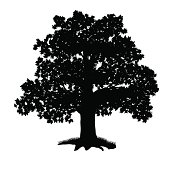 oak tree silhouette with leaves