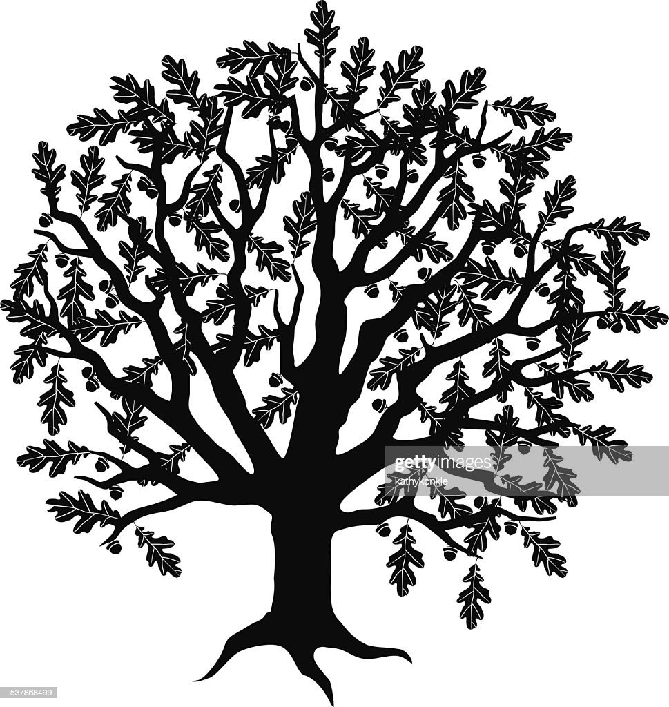 Oak tree with acorns in black and white vector art getty