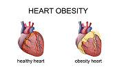 obesity heart. comparison. cardiology.