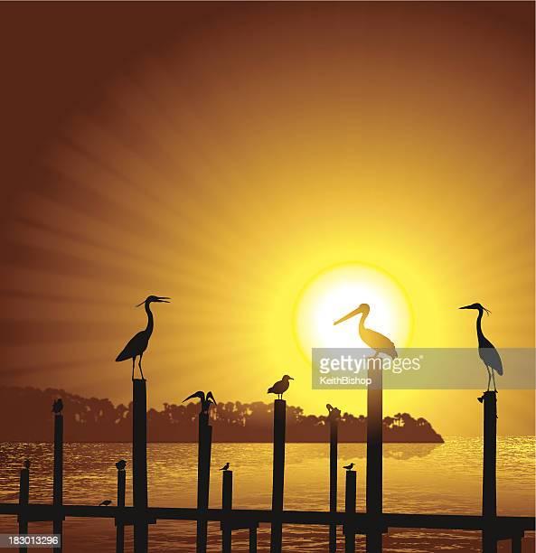Ocean Birds Pier Sun Background - Pelican, Seagull, Crane