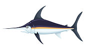 Ocean large swordfish