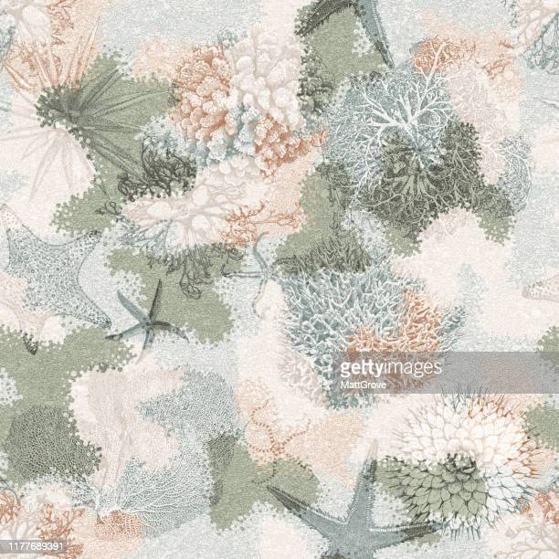 ilustraciones, imágenes clip art, dibujos animados e iconos de stock de ocean seabed coral kelp starfish anemone repeat pattern - estrella de mar