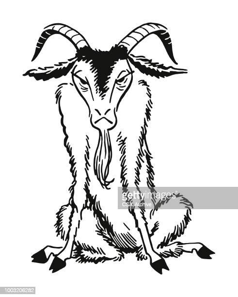 Old Goat with Horns