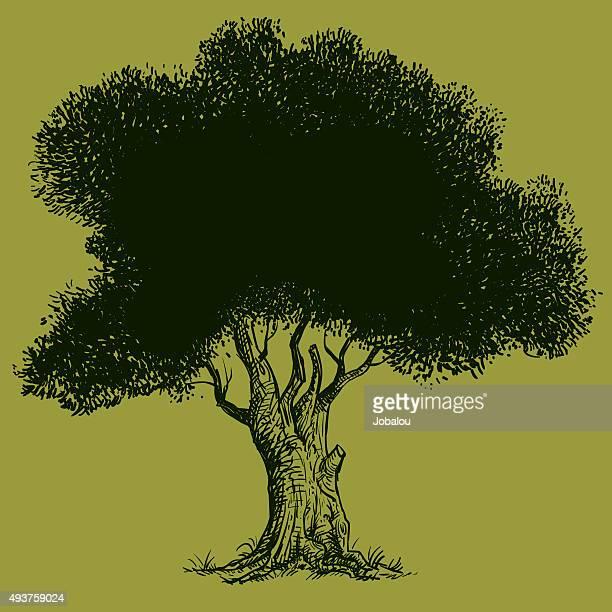 illustrations, cliparts, dessins animés et icônes de old olive tree - olivier