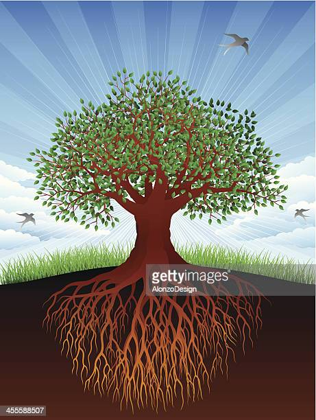 old tree and roots - tree trunk stock illustrations, clip art, cartoons, & icons