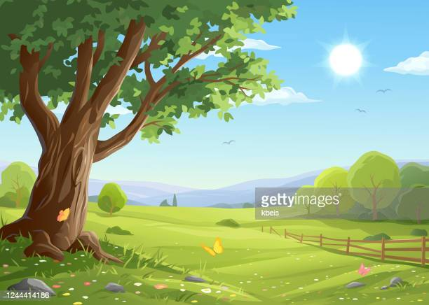 illustrations, cliparts, dessins animés et icônes de vieil arbre dans le paysage idyllique - paysage