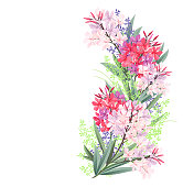 Oleander red and pink flowers, hand drawn vector illustration.