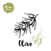 Olive branch poster. Hand drawn sketch style vector illustration for menu design, markets and shops.