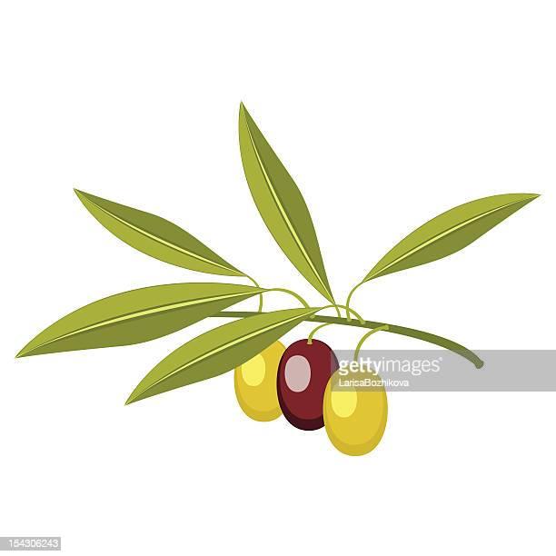 illustrations, cliparts, dessins animés et icônes de olive branch - olivier