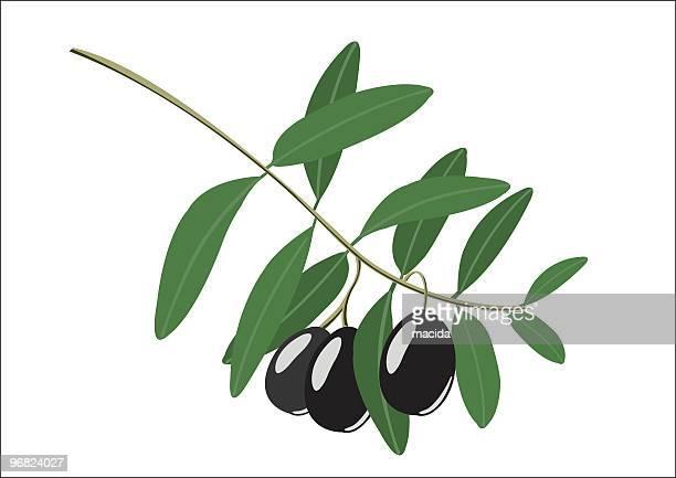 ilustraciones, imágenes clip art, dibujos animados e iconos de stock de olive branch - rama de olivo