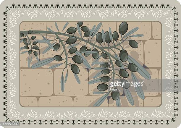 olive branch with shadow on stone wall, floral frame - wailing wall stock illustrations, clip art, cartoons, & icons