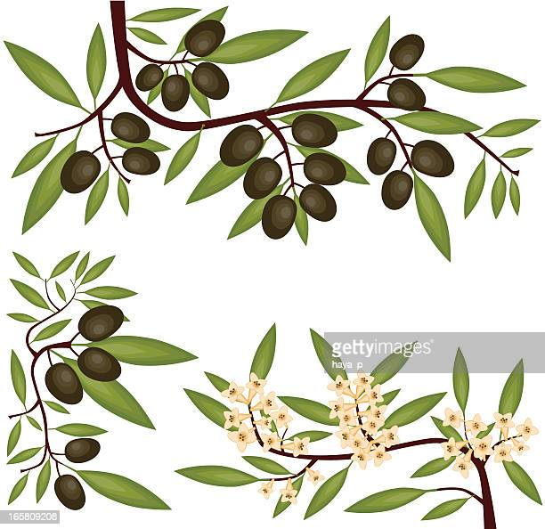 olive branches, fruit and blossom - olive branch stock illustrations