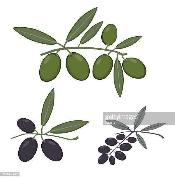 Ramas de oliva