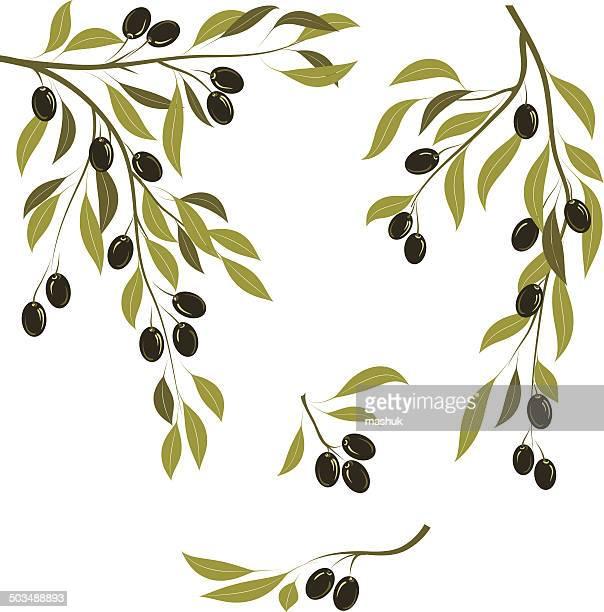 illustrations, cliparts, dessins animés et icônes de branches d'olive - olivier