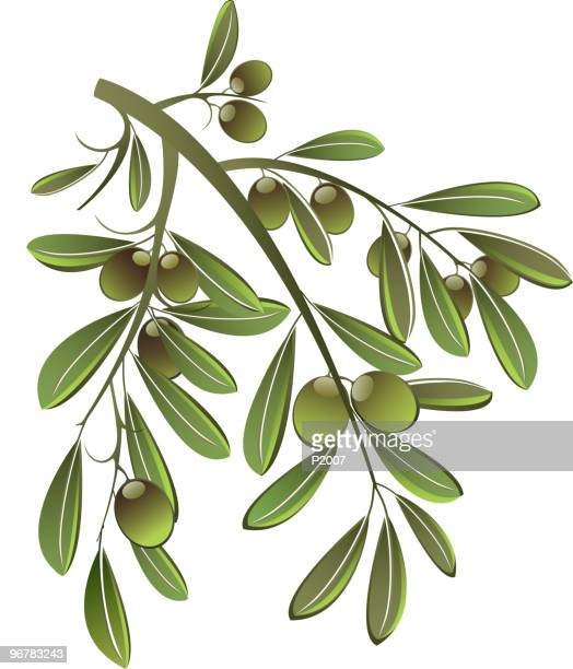 ilustraciones, imágenes clip art, dibujos animados e iconos de stock de ramas de oliva - rama de olivo