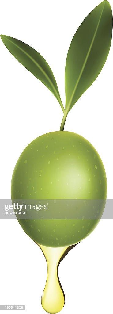 Olive Oil : stock illustration