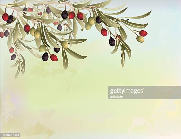 ilustraciones, imágenes clip art, dibujos animados e iconos de stock de olive tree ramas sobre fondo abstracto - rama de olivo