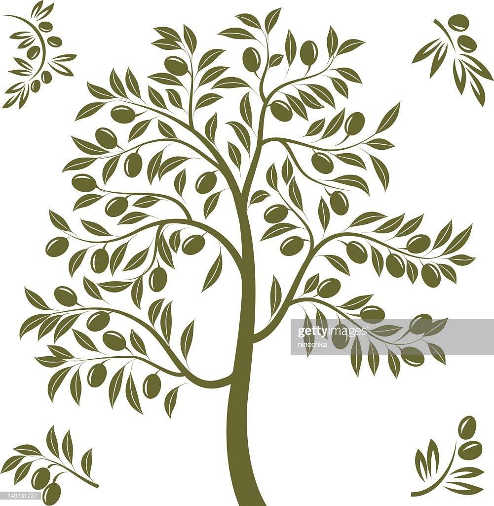 Olive tree : Vectorkunst