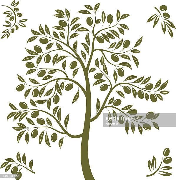 illustrations, cliparts, dessins animés et icônes de olivier tree - olivier