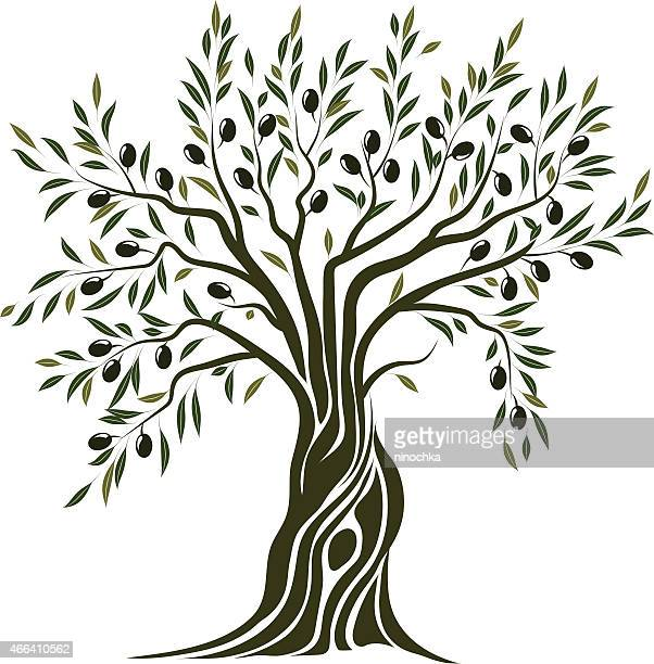 olive tree - tree trunk stock illustrations, clip art, cartoons, & icons