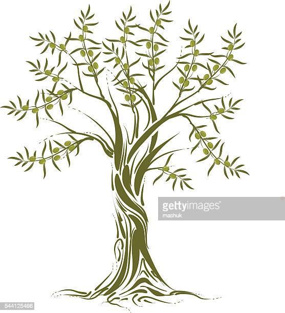 olive tree - olive tree stock illustrations, clip art, cartoons, & icons