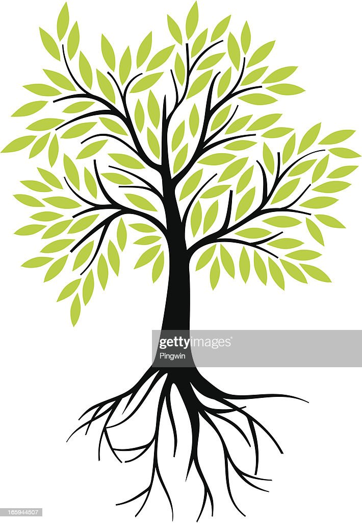 Olive tree with roots