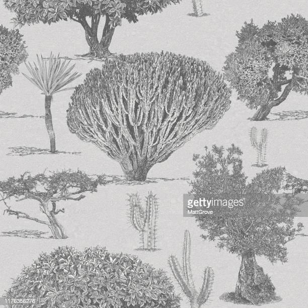 illustrations, cliparts, dessins animés et icônes de olive trees paysage méditerranéen sans couture répéter - olivier