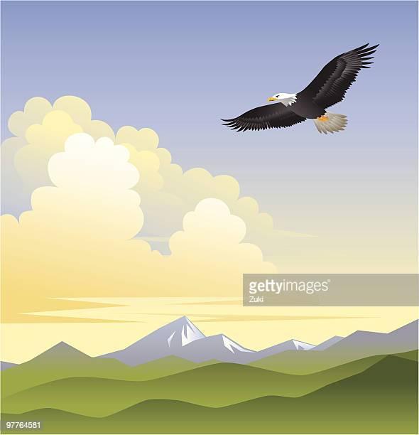 illustrations, cliparts, dessins animés et icônes de les eagles ailes - aigle