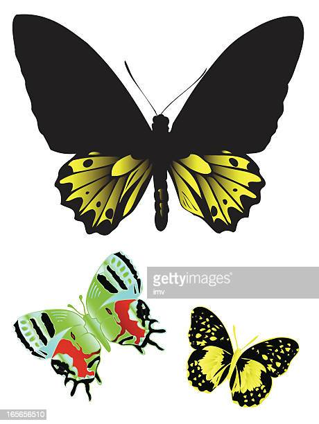 One large and two small butterflies on a white background.