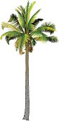 One palm tree.