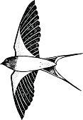 One swallow flies