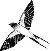 One swallow in flight