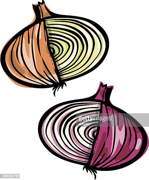 onion doodle - onion stock illustrations, clip art, cartoons, & icons