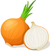 Onion isolated on white. Vector illustration