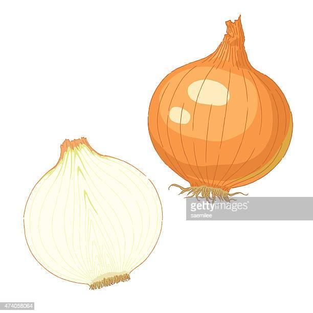 ilustrações, clipart, desenhos animados e ícones de cebola - cebola