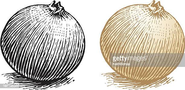 onion - vegetable food - onion stock illustrations, clip art, cartoons, & icons