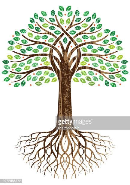 open entwined tree illustration - root stock illustrations, clip art, cartoons, & icons