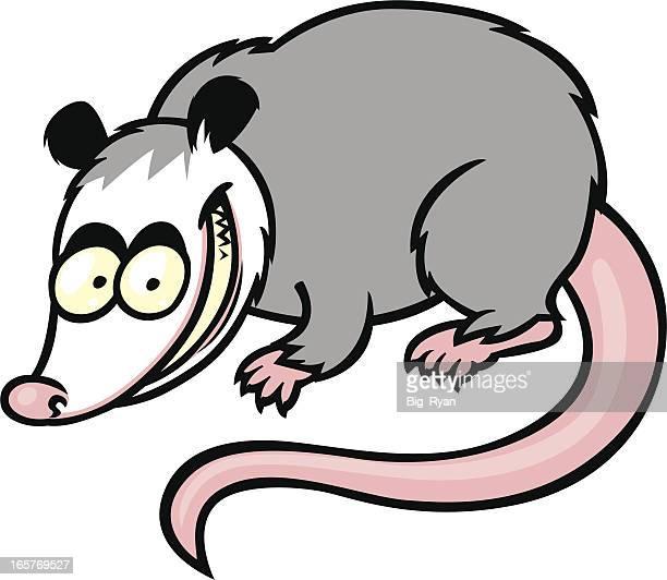 illustrazioni stock, clip art, cartoni animati e icone di tendenza di opossum - opossum
