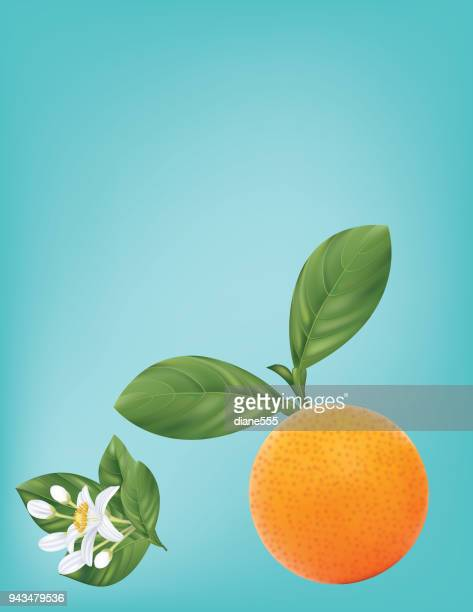 Orange cerezos en flor Branch y frutas