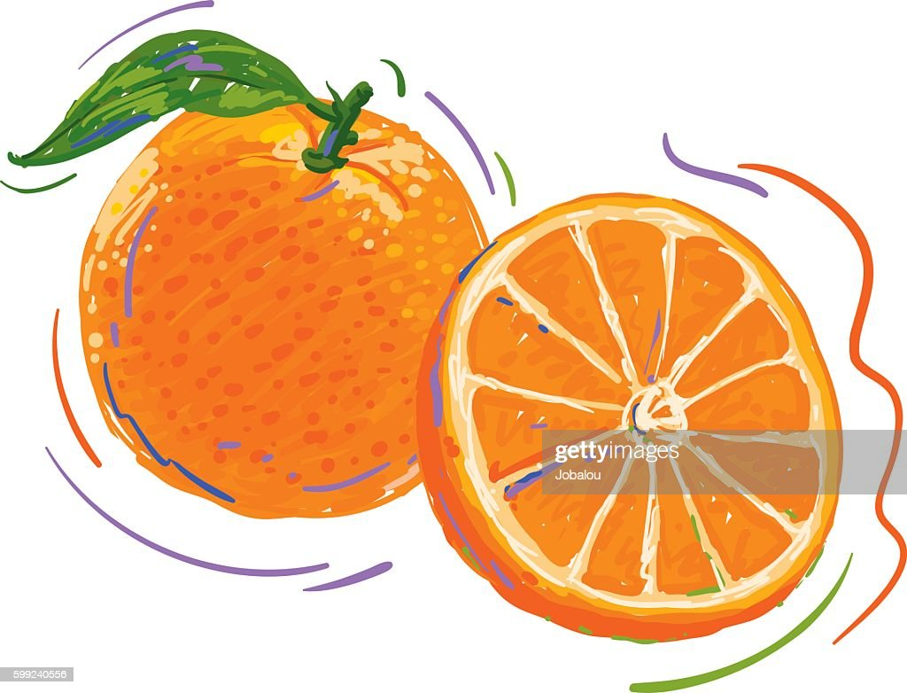 Orange Dynamic Drawing And Color Sketch Vector Art | Getty Images for Drawing Orange Fruit  150ifm
