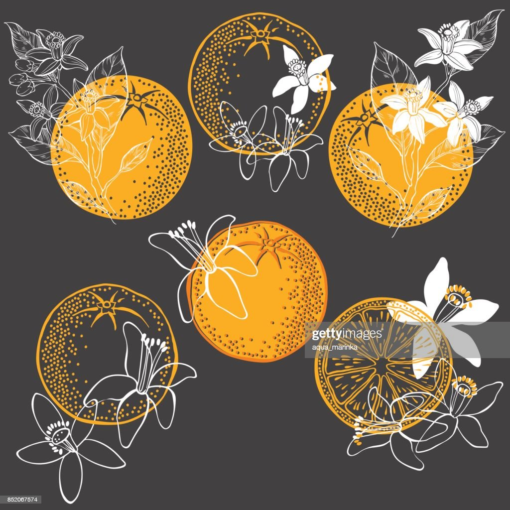 Orange fruit and blossom. Vector illustration of  six different  isolated elements for design. Hand-drawn floral elements on a dark background.